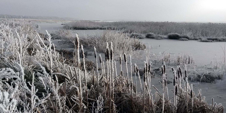 Winter in januari 2017 - Wetering en omgeving